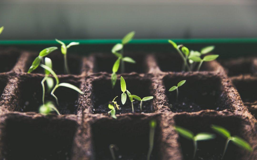 Plant NU je zaadjes zodat je straks kunt oogsten